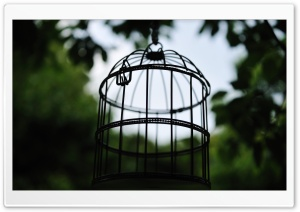 Bird Cage HD Wide Wallpaper for Widescreen