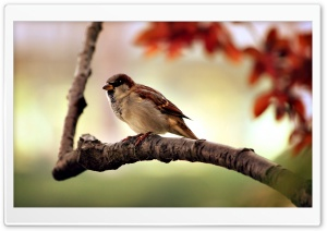Bird Close-Up HD Wide Wallpaper for Widescreen