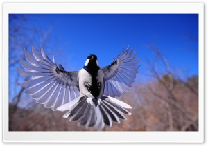 Bird Flying HD Wide Wallpaper for Widescreen
