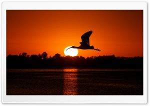 Bird Flying At Sunset HD Wide Wallpaper for Widescreen