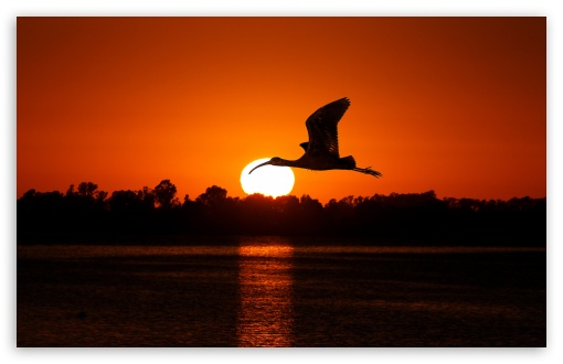 Bird Flying At Sunset HD wallpaper for Wide 16:10 5:3 Widescreen WHXGA WQXGA WUXGA WXGA WGA ; HD 16:9 High Definition WQHD QWXGA 1080p 900p 720p QHD nHD ; Standard 4:3 5:4 3:2 Fullscreen UXGA XGA SVGA QSXGA SXGA DVGA HVGA HQVGA devices ( Apple PowerBook G4 iPhone 4 3G 3GS iPod Touch ) ; Tablet 1:1 ; iPad 1/2/Mini ; Mobile 4:3 5:3 3:2 16:9 5:4 - UXGA XGA SVGA WGA DVGA HVGA HQVGA devices ( Apple PowerBook G4 iPhone 4 3G 3GS iPod Touch ) WQHD QWXGA 1080p 900p 720p QHD nHD QSXGA SXGA ; Dual 4:3 5:4 UXGA XGA SVGA QSXGA SXGA ;