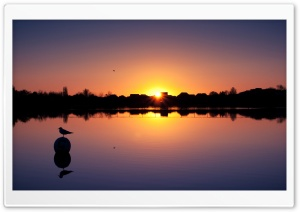 Bird In Sunset HD Wide Wallpaper for Widescreen