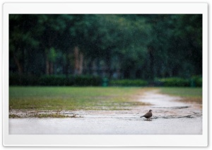 Bird in the Rain HD Wide Wallpaper for Widescreen