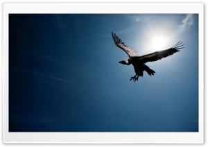 Bird In The Sky Sun HD Wide Wallpaper for Widescreen