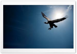 Bird In The Sky Sun Ultra HD Wallpaper for 4K UHD Widescreen desktop, tablet & smartphone