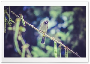 Bird Ku Resimleri HD Wide Wallpaper for Widescreen
