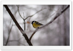 Bird On A Branch HD Wide Wallpaper for Widescreen