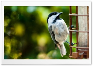 Bird On A Fence HD Wide Wallpaper for Widescreen