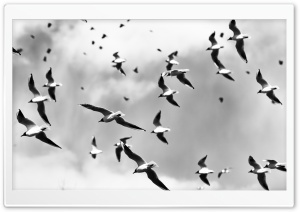 Bird Pattern HD Wide Wallpaper for Widescreen