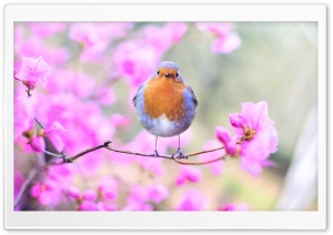 Bird, Pink Flowers, Springtime HD Wide Wallpaper for 4K UHD Widescreen desktop & smartphone