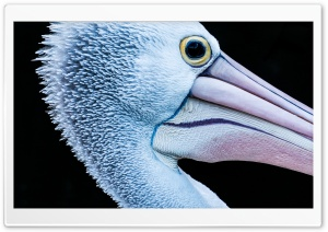 Bird Portrait HD Wide Wallpaper for Widescreen