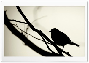 Bird Silhouette HD Wide Wallpaper for Widescreen
