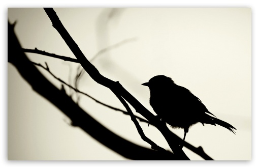 Bird Silhouette HD wallpaper for Wide 16:10 5:3 Widescreen WHXGA WQXGA WUXGA WXGA WGA ; HD 16:9 High Definition WQHD QWXGA 1080p 900p 720p QHD nHD ; Standard 4:3 5:4 3:2 Fullscreen UXGA XGA SVGA QSXGA SXGA DVGA HVGA HQVGA devices ( Apple PowerBook G4 iPhone 4 3G 3GS iPod Touch ) ; Tablet 1:1 ; iPad 1/2/Mini ; Mobile 4:3 5:3 3:2 16:9 5:4 - UXGA XGA SVGA WGA DVGA HVGA HQVGA devices ( Apple PowerBook G4 iPhone 4 3G 3GS iPod Touch ) WQHD QWXGA 1080p 900p 720p QHD nHD QSXGA SXGA ;