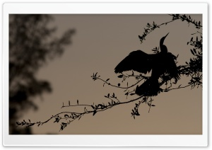 Bird Silhouette On Branch HD Wide Wallpaper for Widescreen