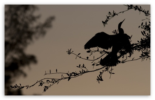 Bird Silhouette On Branch HD wallpaper for Wide 16:10 5:3 Widescreen WHXGA WQXGA WUXGA WXGA WGA ; HD 16:9 High Definition WQHD QWXGA 1080p 900p 720p QHD nHD ; Standard 4:3 5:4 3:2 Fullscreen UXGA XGA SVGA QSXGA SXGA DVGA HVGA HQVGA devices ( Apple PowerBook G4 iPhone 4 3G 3GS iPod Touch ) ; Tablet 1:1 ; iPad 1/2/Mini ; Mobile 4:3 5:3 3:2 16:9 5:4 - UXGA XGA SVGA WGA DVGA HVGA HQVGA devices ( Apple PowerBook G4 iPhone 4 3G 3GS iPod Touch ) WQHD QWXGA 1080p 900p 720p QHD nHD QSXGA SXGA ; Dual 5:4 QSXGA SXGA ;