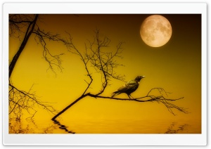 Bird Sitting Under Full Moon HD Wide Wallpaper for Widescreen