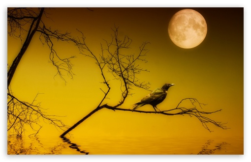 Bird Sitting Under Full Moon HD wallpaper for Wide 16:10 5:3 Widescreen WHXGA WQXGA WUXGA WXGA WGA ; HD 16:9 High Definition WQHD QWXGA 1080p 900p 720p QHD nHD ; Standard 4:3 5:4 3:2 Fullscreen UXGA XGA SVGA QSXGA SXGA DVGA HVGA HQVGA devices ( Apple PowerBook G4 iPhone 4 3G 3GS iPod Touch ) ; Tablet 1:1 ; iPad 1/2/Mini ; Mobile 4:3 5:3 3:2 16:9 5:4 - UXGA XGA SVGA WGA DVGA HVGA HQVGA devices ( Apple PowerBook G4 iPhone 4 3G 3GS iPod Touch ) WQHD QWXGA 1080p 900p 720p QHD nHD QSXGA SXGA ; Dual 16:10 5:3 16:9 4:3 5:4 WHXGA WQXGA WUXGA WXGA WGA WQHD QWXGA 1080p 900p 720p QHD nHD UXGA XGA SVGA QSXGA SXGA ;