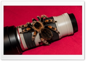 Bird Spider on Lens HD Wide Wallpaper for Widescreen