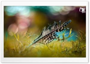Bird Wing HD Wide Wallpaper for 4K UHD Widescreen desktop & smartphone