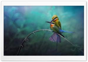 Birds Ultra HD Wallpaper for 4K UHD Widescreen desktop, tablet & smartphone