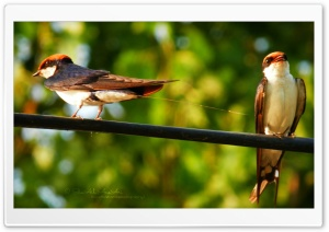Birds - Shoaib Photography - HD Wide Wallpaper for Widescreen