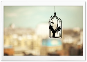 Birds Cage Photo HD HD Wide Wallpaper for Widescreen