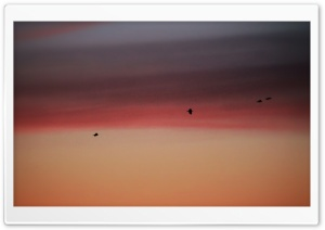 Birds in Burning Sky HD Wide Wallpaper for Widescreen