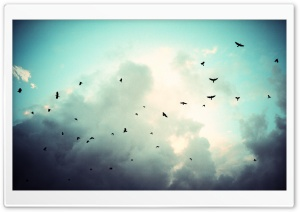 Birds In Flight HD Wide Wallpaper for Widescreen