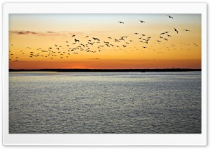 Birds In Flight, Sunset HD Wide Wallpaper for Widescreen