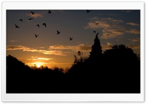 Birds In The Park, Sunset HD Wide Wallpaper for Widescreen