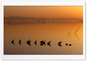 Birds On The Lake HD Wide Wallpaper for Widescreen