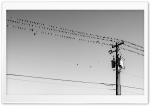 Birds On Wires HD Wide Wallpaper for 4K UHD Widescreen desktop & smartphone
