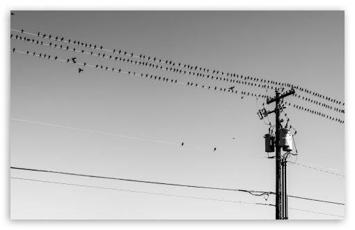 Birds On Wires ❤ 4K UHD Wallpaper for Wide 16:10 5:3 Widescreen WHXGA WQXGA WUXGA WXGA WGA ; 4K UHD 16:9 Ultra High Definition 2160p 1440p 1080p 900p 720p ; Standard 4:3 5:4 3:2 Fullscreen UXGA XGA SVGA QSXGA SXGA DVGA HVGA HQVGA ( Apple PowerBook G4 iPhone 4 3G 3GS iPod Touch ) ; Smartphone 5:3 WGA ; Tablet 1:1 ; iPad 1/2/Mini ; Mobile 4:3 5:3 3:2 16:9 5:4 - UXGA XGA SVGA WGA DVGA HVGA HQVGA ( Apple PowerBook G4 iPhone 4 3G 3GS iPod Touch ) 2160p 1440p 1080p 900p 720p QSXGA SXGA ; Dual 16:10 5:3 16:9 4:3 5:4 WHXGA WQXGA WUXGA WXGA WGA 2160p 1440p 1080p 900p 720p UXGA XGA SVGA QSXGA SXGA ;