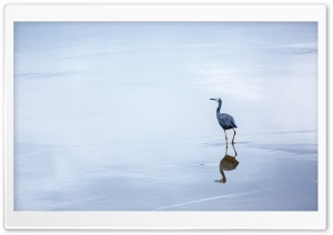 Birds Reflection In Water HD Wide Wallpaper for Widescreen