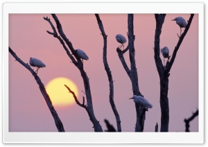 Birds Sitting On A Tree Branch HD Wide Wallpaper for Widescreen