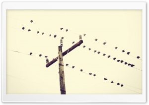 Birds Sitting On Power Lines HD Wide Wallpaper for Widescreen