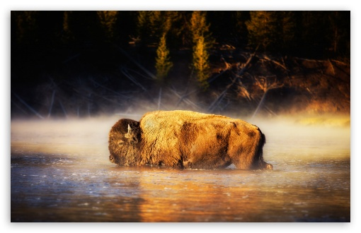 Bison ❤ 4K UHD Wallpaper for Wide 16:10 5:3 Widescreen WHXGA WQXGA WUXGA WXGA WGA ; 4K UHD 16:9 Ultra High Definition 2160p 1440p 1080p 900p 720p ; Standard 4:3 5:4 3:2 Fullscreen UXGA XGA SVGA QSXGA SXGA DVGA HVGA HQVGA ( Apple PowerBook G4 iPhone 4 3G 3GS iPod Touch ) ; Smartphone 16:9 3:2 5:3 2160p 1440p 1080p 900p 720p DVGA HVGA HQVGA ( Apple PowerBook G4 iPhone 4 3G 3GS iPod Touch ) WGA ; Tablet 1:1 ; iPad 1/2/Mini ; Mobile 4:3 5:3 3:2 16:9 5:4 - UXGA XGA SVGA WGA DVGA HVGA HQVGA ( Apple PowerBook G4 iPhone 4 3G 3GS iPod Touch ) 2160p 1440p 1080p 900p 720p QSXGA SXGA ;