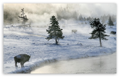 Bison In Winter ❤ 4K UHD Wallpaper for Wide 16:10 5:3 Widescreen WHXGA WQXGA WUXGA WXGA WGA ; 4K UHD 16:9 Ultra High Definition 2160p 1440p 1080p 900p 720p ; Standard 4:3 5:4 3:2 Fullscreen UXGA XGA SVGA QSXGA SXGA DVGA HVGA HQVGA ( Apple PowerBook G4 iPhone 4 3G 3GS iPod Touch ) ; Tablet 1:1 ; iPad 1/2/Mini ; Mobile 4:3 5:3 3:2 16:9 5:4 - UXGA XGA SVGA WGA DVGA HVGA HQVGA ( Apple PowerBook G4 iPhone 4 3G 3GS iPod Touch ) 2160p 1440p 1080p 900p 720p QSXGA SXGA ; Dual 16:10 5:3 16:9 4:3 5:4 WHXGA WQXGA WUXGA WXGA WGA 2160p 1440p 1080p 900p 720p UXGA XGA SVGA QSXGA SXGA ;