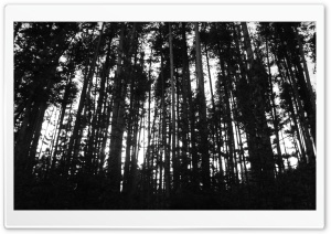 Black & White Trees HD Wide Wallpaper for Widescreen