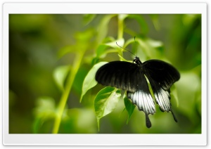 Black And White Butterfly HD Wide Wallpaper for 4K UHD Widescreen desktop & smartphone