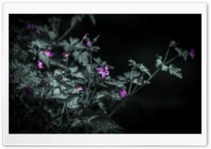 Black and White Flowers Ultra HD Wallpaper for 4K UHD Widescreen desktop, tablet & smartphone