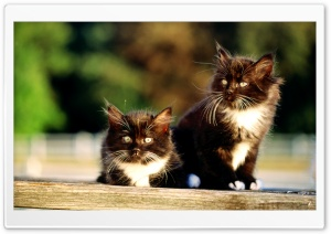 Black And White Kittens HD Wide Wallpaper for Widescreen