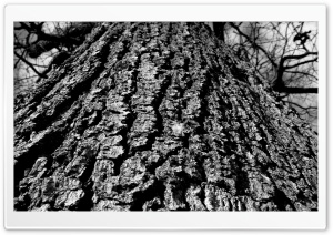 Black And White Tree Trunk HD Wide Wallpaper for Widescreen