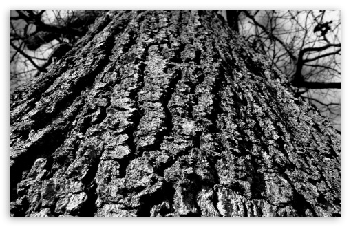 Black And White Tree Trunk HD wallpaper for Wide 16:10 5:3 Widescreen WHXGA WQXGA WUXGA WXGA WGA ; HD 16:9 High Definition WQHD QWXGA 1080p 900p 720p QHD nHD ; Standard 3:2 Fullscreen DVGA HVGA HQVGA devices ( Apple PowerBook G4 iPhone 4 3G 3GS iPod Touch ) ; Mobile 5:3 3:2 16:9 - WGA DVGA HVGA HQVGA devices ( Apple PowerBook G4 iPhone 4 3G 3GS iPod Touch ) WQHD QWXGA 1080p 900p 720p QHD nHD ;