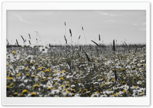 Black And Yellow Field HD Wide Wallpaper for Widescreen