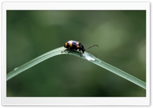 Black Beetles With Orange Spots HD Wide Wallpaper for Widescreen