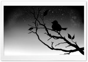 Black Bird HD Wide Wallpaper for Widescreen