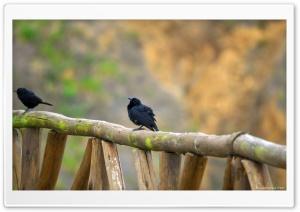 Black Birds HD Wide Wallpaper for Widescreen