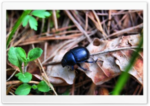 Black Bug HD Wide Wallpaper for Widescreen
