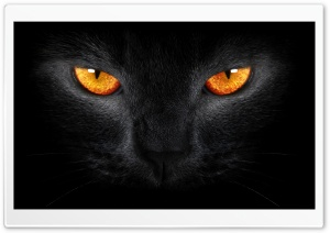 Black Cat HD Wide Wallpaper for Widescreen